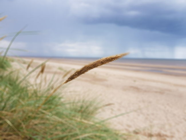 Nature Outdoors Sea Horizon Over Water Scenics Beach By The Seaside By The Sea Mablethorpebeach Mablethorpe Seaside Grass Beauty In Nature Close-up