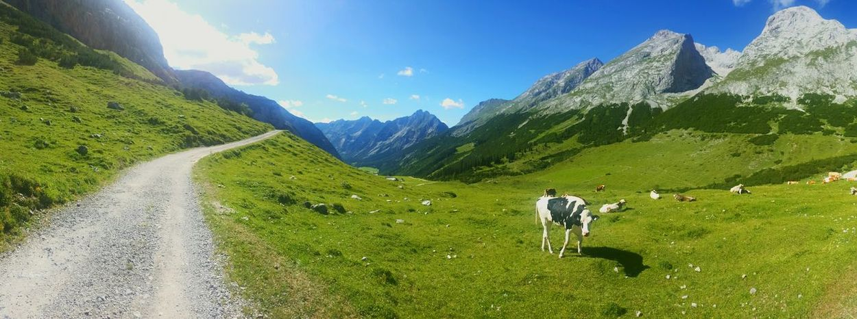 Österreich Karwendel Alps Mountains Cow Path Way Grass Blue Sky Panoramic Panorama Showcase August Outdoors Nature Naturelovers Austria Way To Go