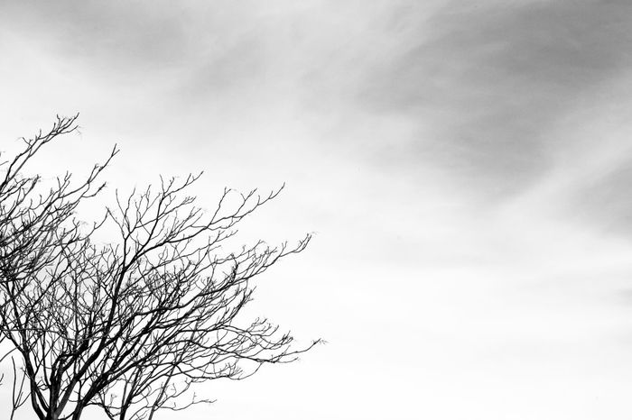 Loneliness Lonely Sky And Clouds Winter Bare Tree Beauty In Nature Black And White Blackandwhite Branch Cloud - Sky Cold Day Lonely Tree Nature No People Outdoors Sky Tranquility Tree Wind