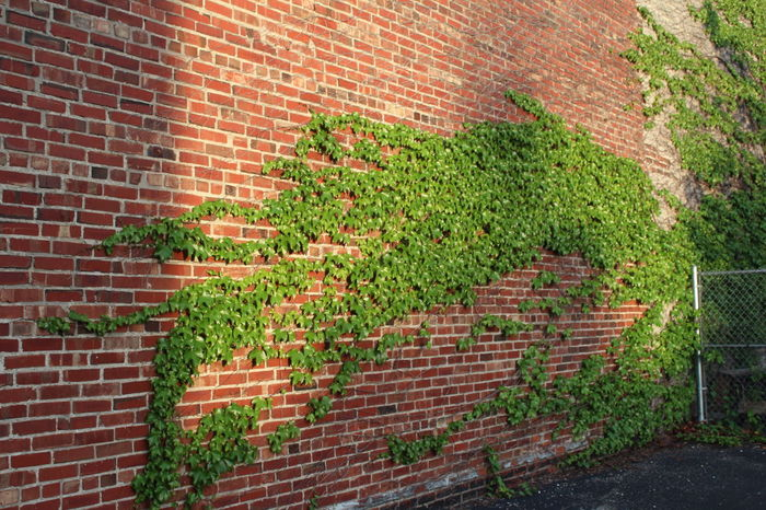 Architecture Brick Brick Wall Building Exterior Built Structure City Day Growth House Ivy Nature No People Outdoors Plant Sidewalk Wall - Building Feature
