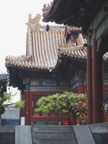 YongHe Gong Beijing, China Chinese Culture Chinese Architecture Chinese History Chinese Art Chinese Style China Photos Harmony Lama Temple Walls Tranquilitity Peace And Quiet Buddhism Buddhist Temple Tree Green Tree