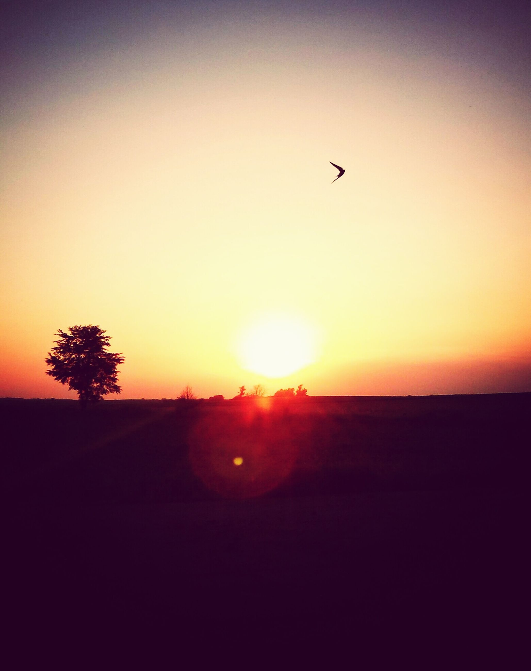 sunset, sun, silhouette, flying, orange color, scenics, bird, tranquil scene, beauty in nature, tranquility, animal themes, clear sky, copy space, nature, sky, idyllic, landscape, one animal, wildlife, sunlight