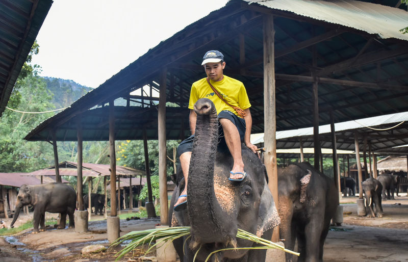 Agriculture Cow Day Domestic Animals Elephant Elephant ♥ Farm Farmer Front View Lifestyles Livestock Looking At Camera Mammal Nature Occupation One Person Outdoors Portrait Real People Sky Young Adult Young Animal