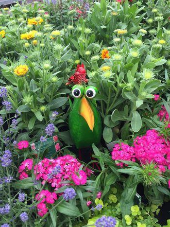 174/365 Hallo Kollege Flower Growth Green Color Beauty In Nature One Animal Multi Colored Animal Themes Sorcerer86 IPhoneography Iphone6 Photooftheday Bilsbekblog Eyeemgermany Photo365 Eyeemprisdorf