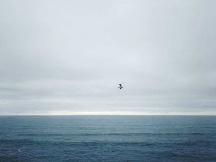 Seagull Seascape Ocean Horizon Calm Distant