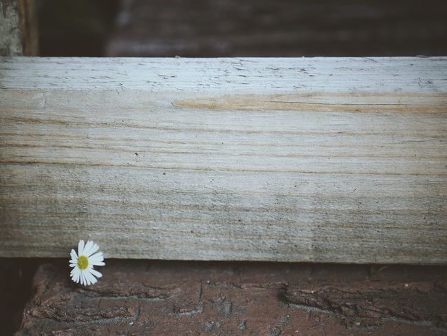 ... The spaces words can never fill. | Daisy Flowers Wall White Morning Light Beauty