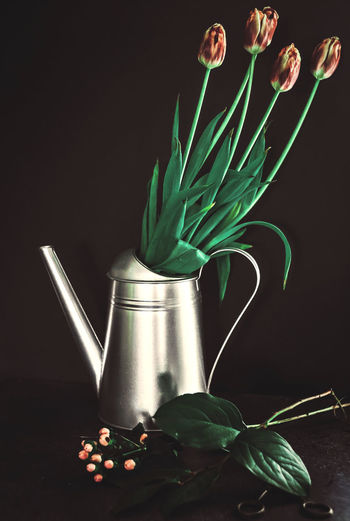 Close-up of plant in vase on table against black background