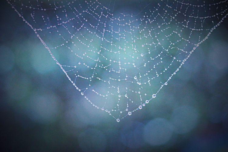 雫ネックレス… Blue Drops 玉ボケ 蜘蛛の巣 雫