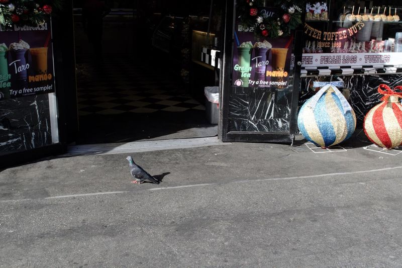 Candy Store Bird Shopping Pigeons Animal Themes Vertebrate Architecture Animal City Day Built Structure Bird No People One Animal Street Outdoors Building Exterior Sidewalk