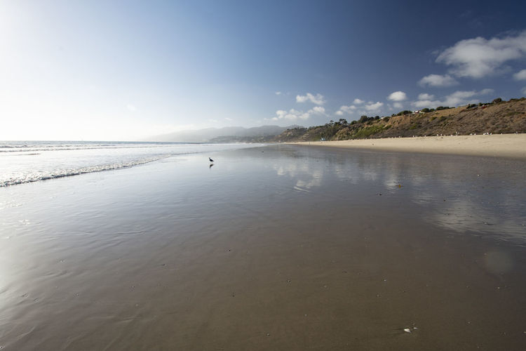 Sea of Tranquility California Coastline Pacfic Ocean Beach Beauty In Nature Beauty In Nature Cloud - Sky Day Idyllic Mountain Nature Non-urban Scene One Animal Outdoors Reflection Sand Scenics - Nature Sea Sky Tranquil Scene Tranquility Water
