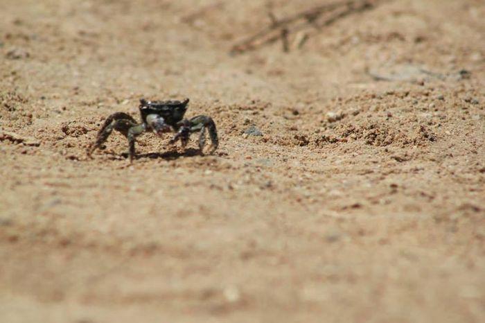 Crab Sand Taking Photos Flippa K Asks: What Inspires You?