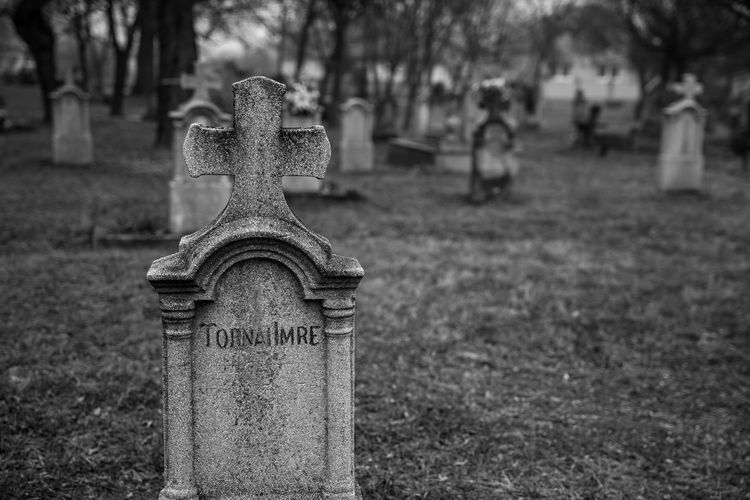 RIP. Cemetery Tombstone Focus On Foreground Tree Memorial Outdoors Close-up Graveyard No People Day Blackandwhite Black And White Felsőzsolca Black & White Blackandwhite Photography Black And White Photography Black&white Depressed Cross Hungary