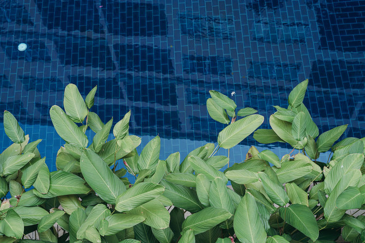 Close-up of plants against swimming pool