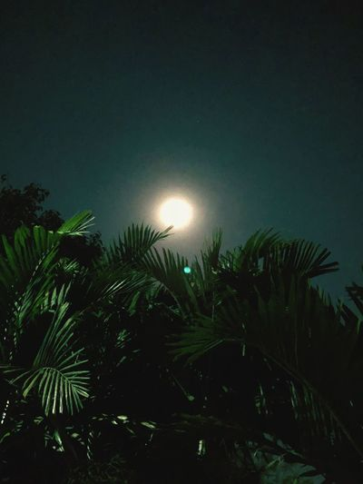Palm Tree Growth Nature Beauty In Nature Moon Sun Tranquility