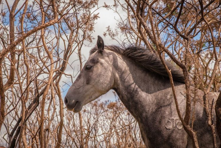 One Animal Animal Themes Horse Animals In The Wild Nature Branch Wild Horses Horse Profile Profile Of A Horse New Forest New Forest Pony Grey Horse Grey Mare Horse Mane Horse In Trees Bare Tree Tree Domestic Animals Day Outdoors Mammal No People Close-up Sky