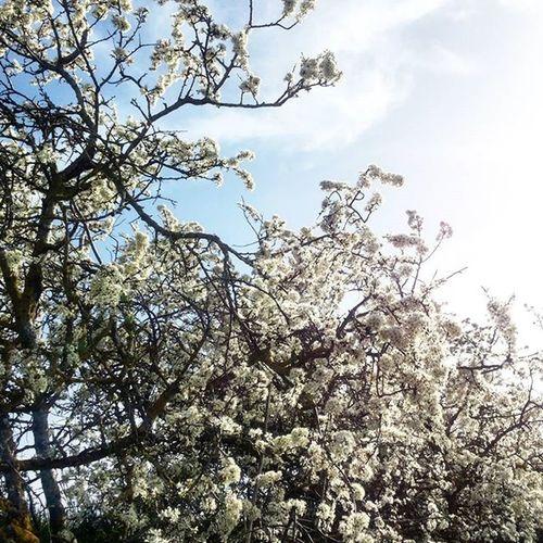 Biancospino Primavera2016