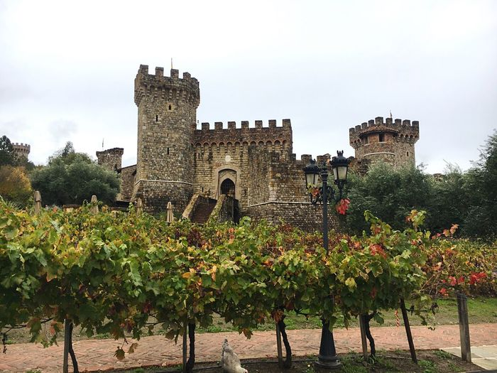 Castle Winery Built Structure Architecture Building Exterior Low Angle View Tree Plant Sky Outdoors No People Day Nature