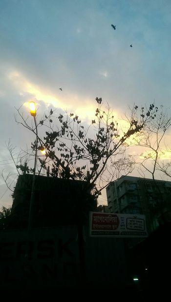 On The Road No Edit/no Filter Birds Evening Sky Lamppost Tree