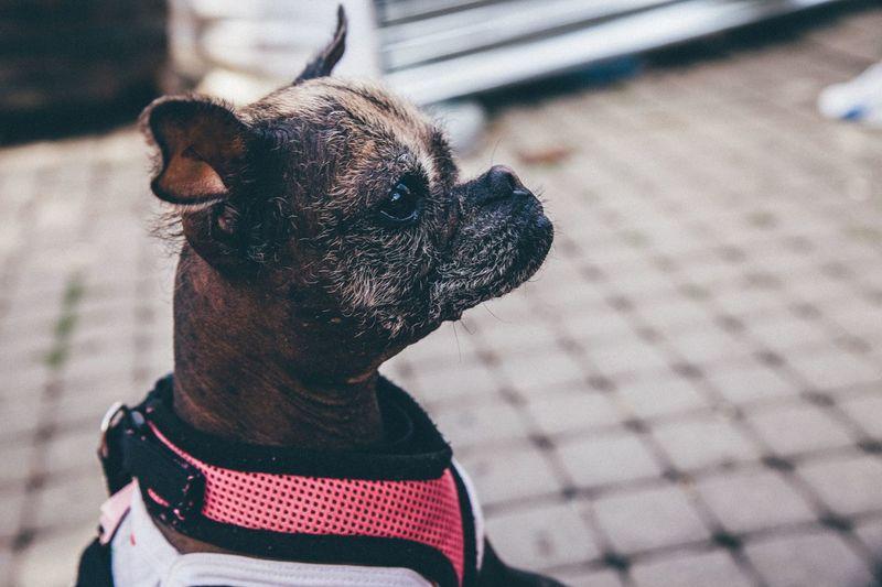 Close-up of dog on street