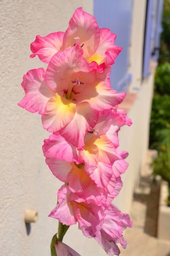 Flower On My