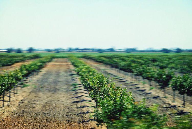 Landscape Farm Field California