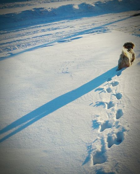 My Winter Favorites Dogslife First_snow Light And Shadow Snow Covered Snow ❄ Road Footprints
