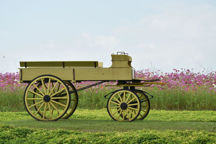 Chaingrai Day Flower Grass History Nature No People Old-fashioned Outdoors Singhapark Sky War Wheel