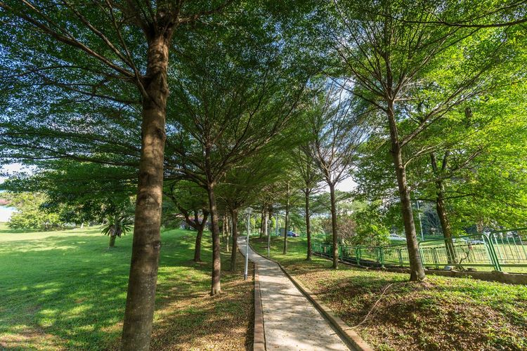 Singapore Landscapes: Beneath the Geometry trees 2 Beauty In Nature Day Diminishing Perspective Direction Footpath Grass Green Color Growth Land Landscape Nature No People Outdoors Plant Road The Way Forward Tranquility Tree Tree Trunk Treelined Trunk