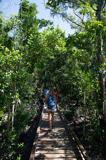 Rear view of man walking on walkway amidst trees in forest