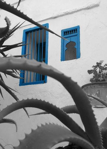 No People Outdoors Sidi Bou Said Windows Travel Destinations Tree Blue Tranquil Scene Architecture
