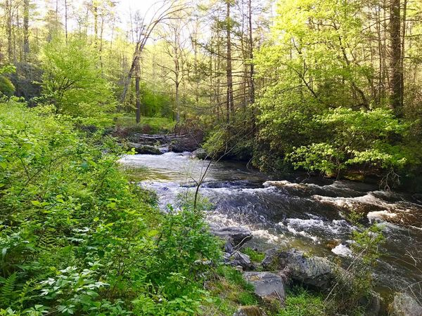 Aaron Blackwell Photography Green Color Plant Water Growth Nature Day No People Beauty In Nature Tree Sunlight Tranquility Outdoors High Angle View Land Grass Scenics - Nature Forest Full Frame Flowing Water The Great Outdoors - 2018 EyeEm Awards