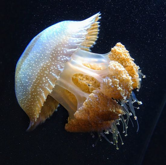World Ocean Day 2014 World Ocean Day Jellyfish Monterey Bay Aquarium