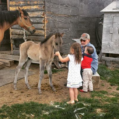 I'm so thankful my kids get to have these sweet moments with their papa! Brennarose Zevincarlos Morgans Papasboy Farmlife CountryLivinG Idahogram Horses Colt Oneweekold