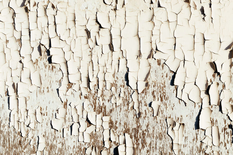 Full frame shot of dry leaf on white wall