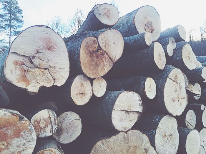 Log Wood - Material Timber Deforestation Lumber Industry Stack Environmental Issues No People Large Group Of Objects Woodpile Nature Backgrounds Close-up Outdoors Forestry Industry Day Still Object Tree Area Forest Tree Nature Tree Trunk Growth Tranquil Scene