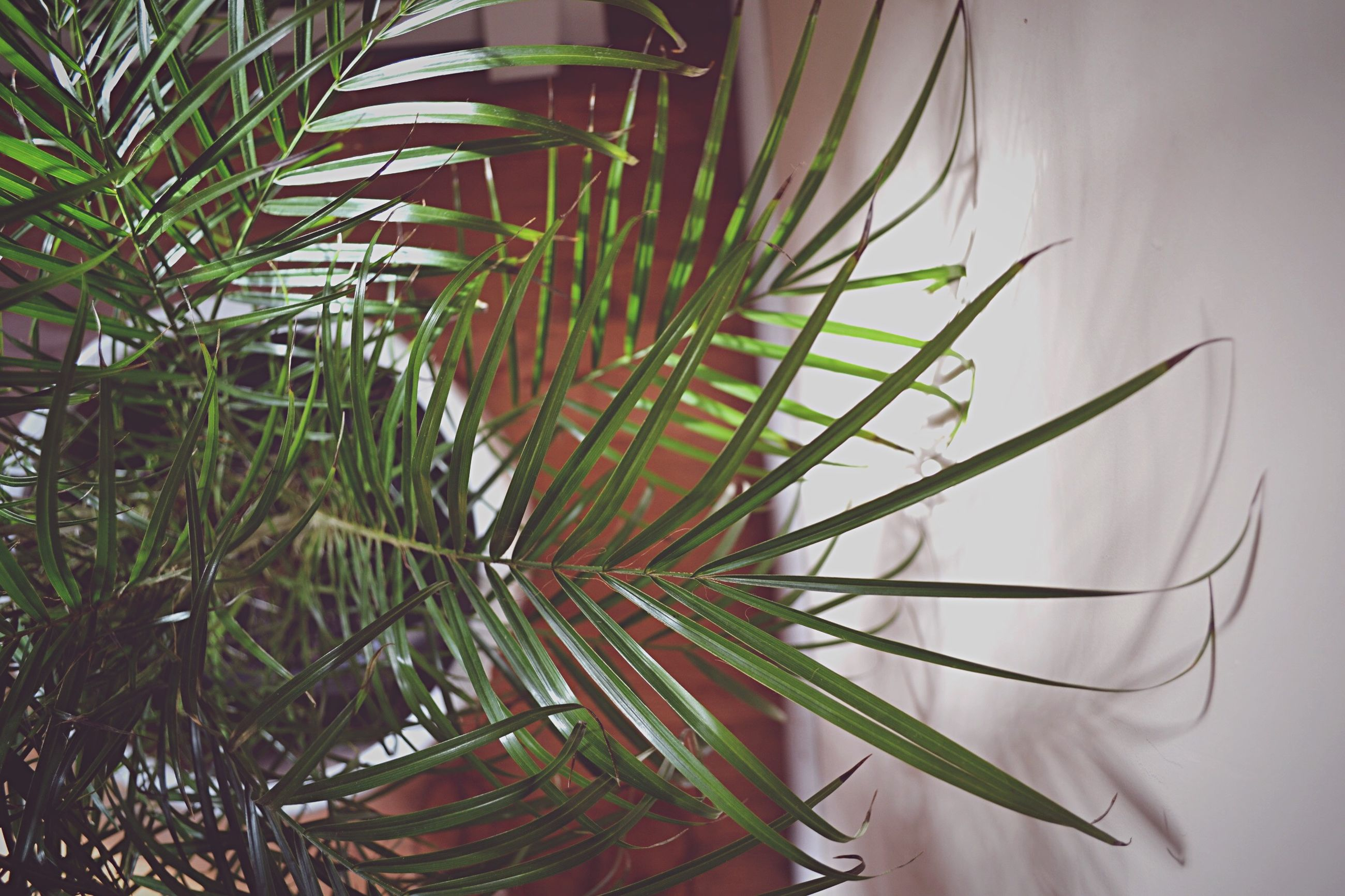 leaf, growth, plant, close-up, palm tree, nature, cactus, potted plant, stem, green color, thorn, beauty in nature, spiked, no people, palm leaf, day, outdoors, low angle view, fragility, growing
