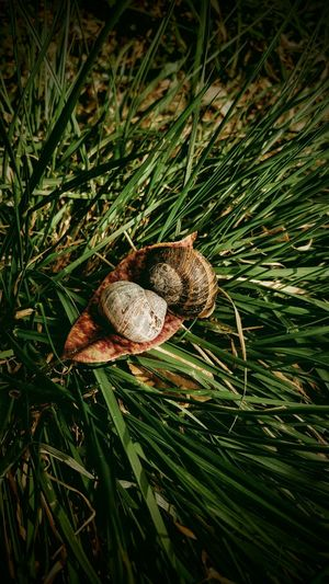 Friendship Close-up Grass Snail Animal Shell