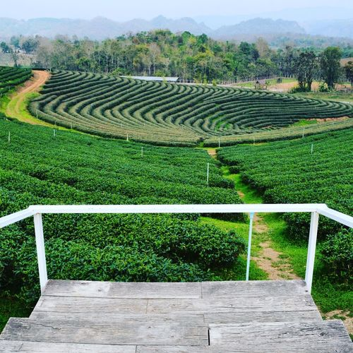 Landscape Nature Outdoors Green Color No People Thailand Travel