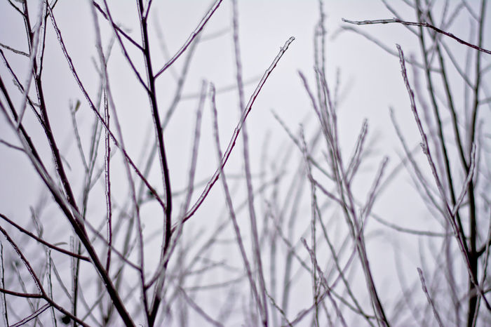 Frozen twigs, selective focus Ice Backgrounds Bare Tree Branch Close-up Cold Temperature Focus On Foreground Frozen Twig Twigs Selective Focus Nature Nature Details Outdoors Tree Winter