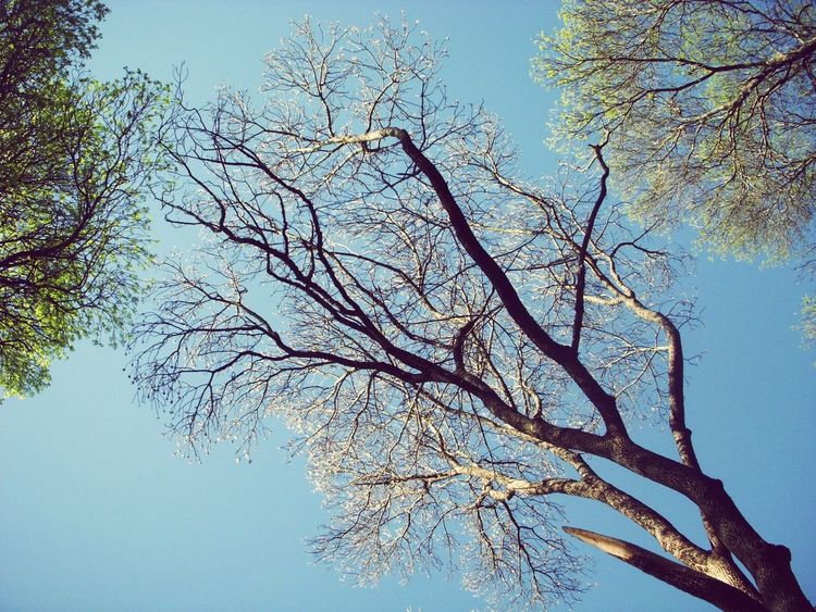 Love Sky Nature Tree No People Day Low Angle View Outdoors Clear Sky Beauty In Nature Branch Tranquility Bare Tree Close-up