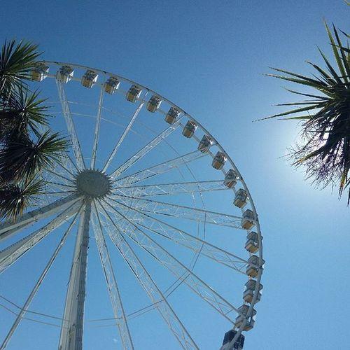 EF Sprachreise Torquay GB Bigwheel Sun Harbour Pause Entspannen Wiese  Palmen Park Enjoying the sun in Torquay wir haben nix besseres zu tun😍😍🌞🌞🌞🌞🌞