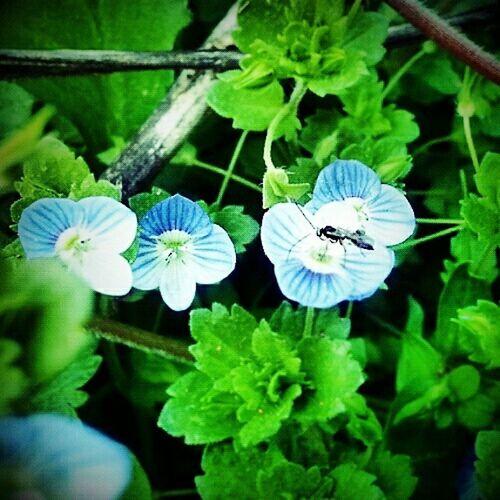 큰개불알꽃Wildflowers Small Flowers Flowers, Nature And Beauty Good Times Flowerlovers Flowerporn