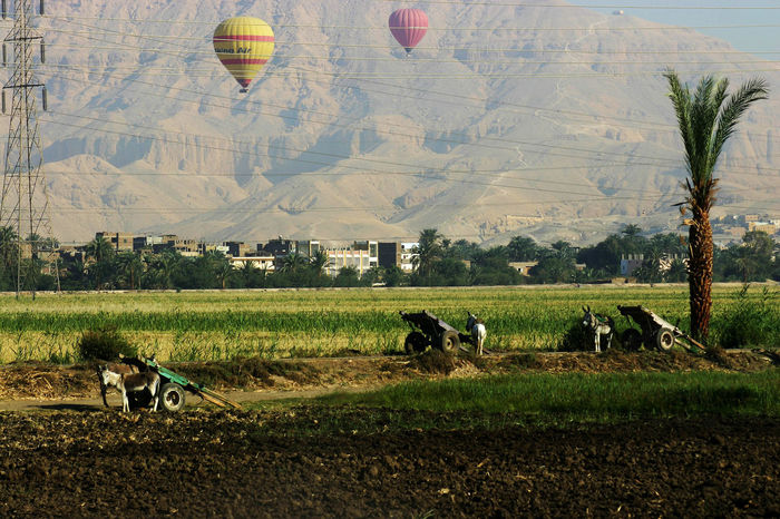 Life lines Balloons Cart Domestic Animals Donkies Electric Lines Field Hot Air Balloon Landscape Luxor_temple Mountain Nature Outdoors Power Line