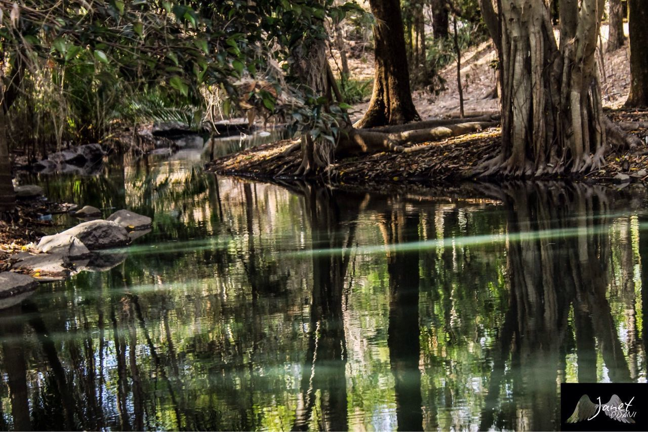 reflection, tree, water, lake, plant, tranquility, trunk, waterfront, forest, nature, tree trunk, no people, beauty in nature, tranquil scene, day, standing water, outdoors, land, scenics - nature