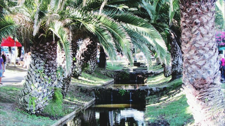 This is a great garden.... in Estoril.. love palm tree.. Supernormal Light Up Your Life Love To Take Photos :)  Hanging Out