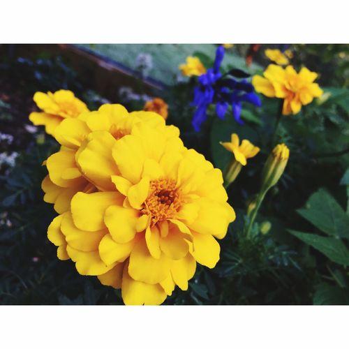 • yellow •