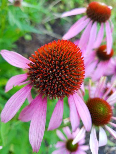In Bloom Flower