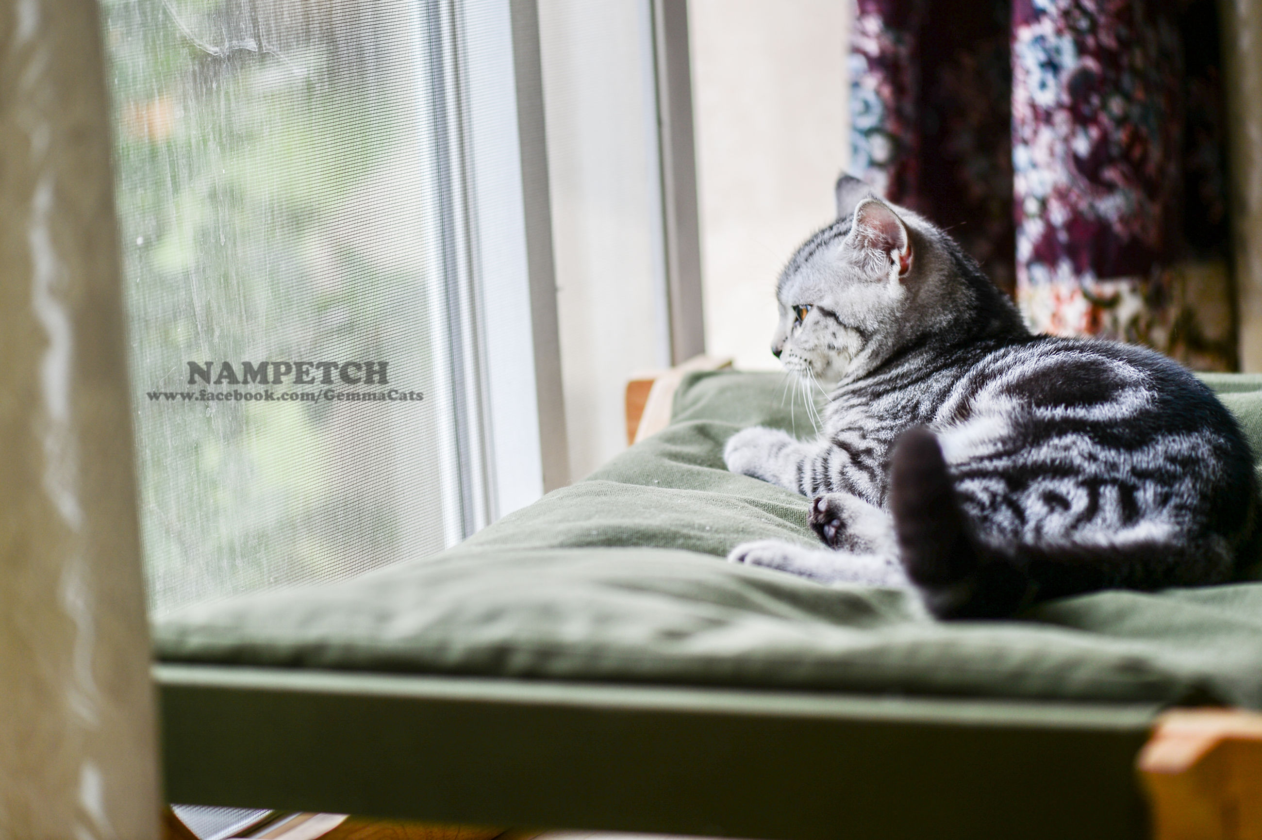 indoors, pets, domestic animals, animal themes, one animal, mammal, relaxation, home interior, resting, domestic cat, sleeping, lying down, bed, window, cat, curtain, home, dog, comfortable, feline