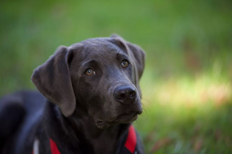 Close-up portrait of dog on field