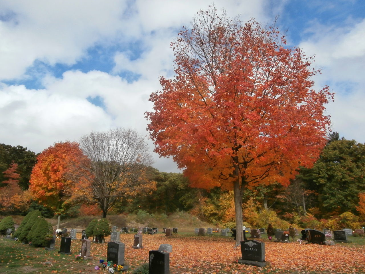 tree, autumn, change, leaf, nature, cemetery, tombstone, beauty in nature, tranquility, day, sky, no people, outdoors, maple tree, tranquil scene, memorial, cloud - sky, growth, scenics, branch, maple